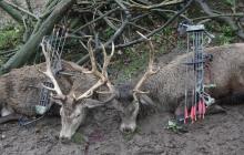 Fotografie Poľovačka na jelene a divé morky