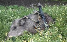 Fotografie Poľovačka na diviaky a muflóny