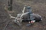 Fotografie Úspešná poľovačka na daniela lukom