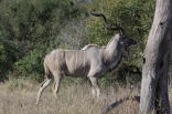 Fotografie Umiestnenie zásahu, účinok loveckého hrotu, dohľadávka